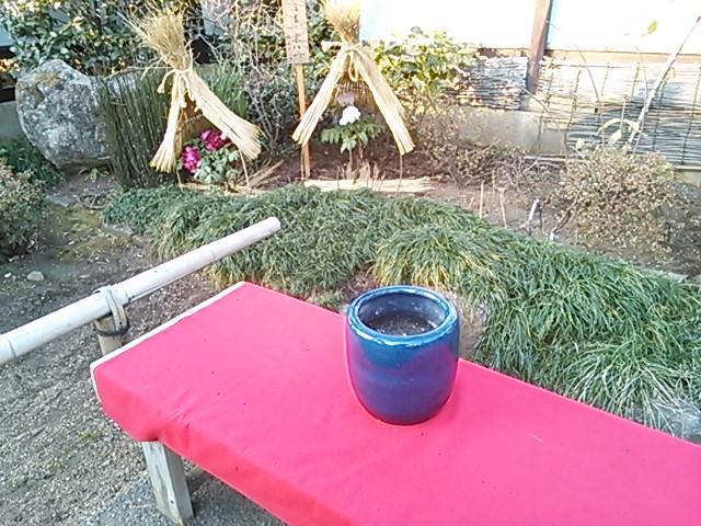 上野 冬牡丹吟行